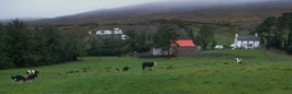 picture of farm from wide angle - cows, farmhouse, etc