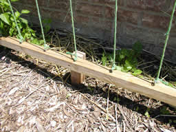 picture of base trellis board with stakes, screw eyes, and twine