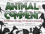 shadows of sea animals and birds around the words 'animal comment'; link for funny animation; opens in new window