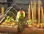urban gardening videos link; thumb of female gardener in-between two raised beds