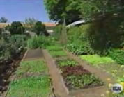 serious backyard garden; click to go to video page at external site; opens in new window