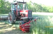 photo of tractor rolling/tamping down cover crop; click to go to video page; opens in new window